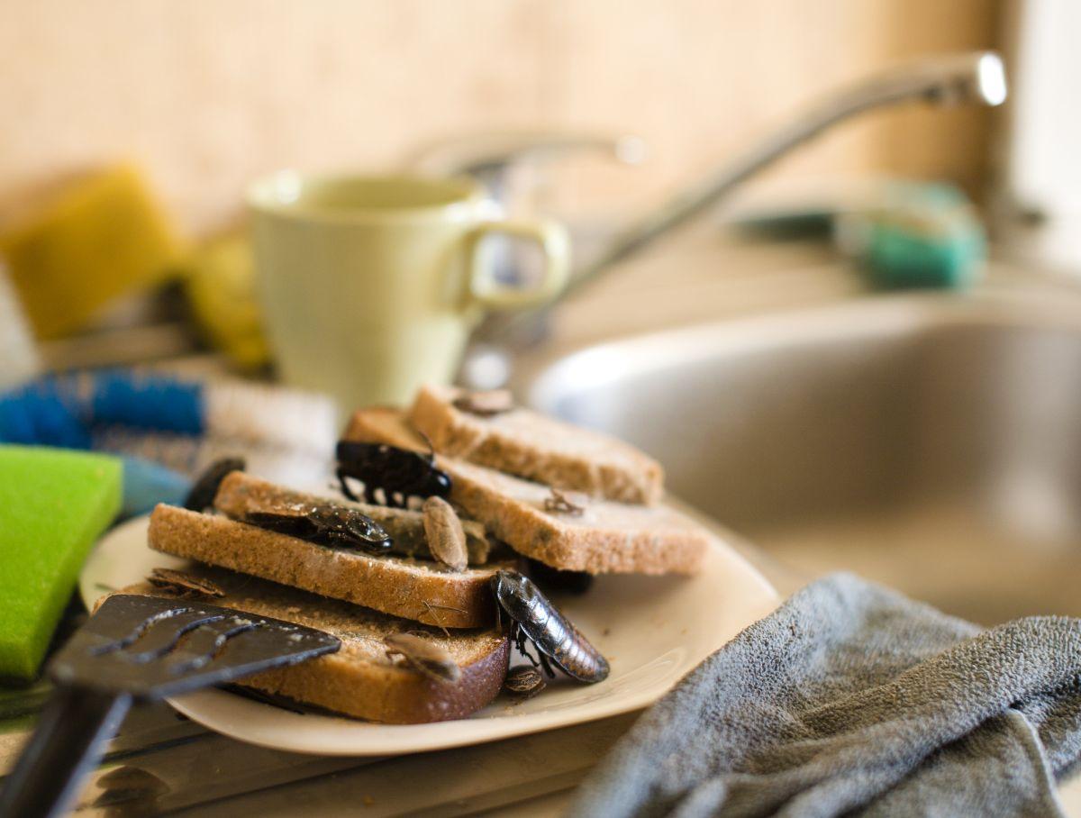 Blatte De Cuisine Photo comment se débarrasser des cafards dans une maison (et
